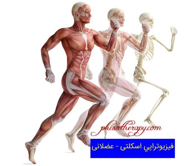فیزیوتراپی اسکلتی – عضلانی