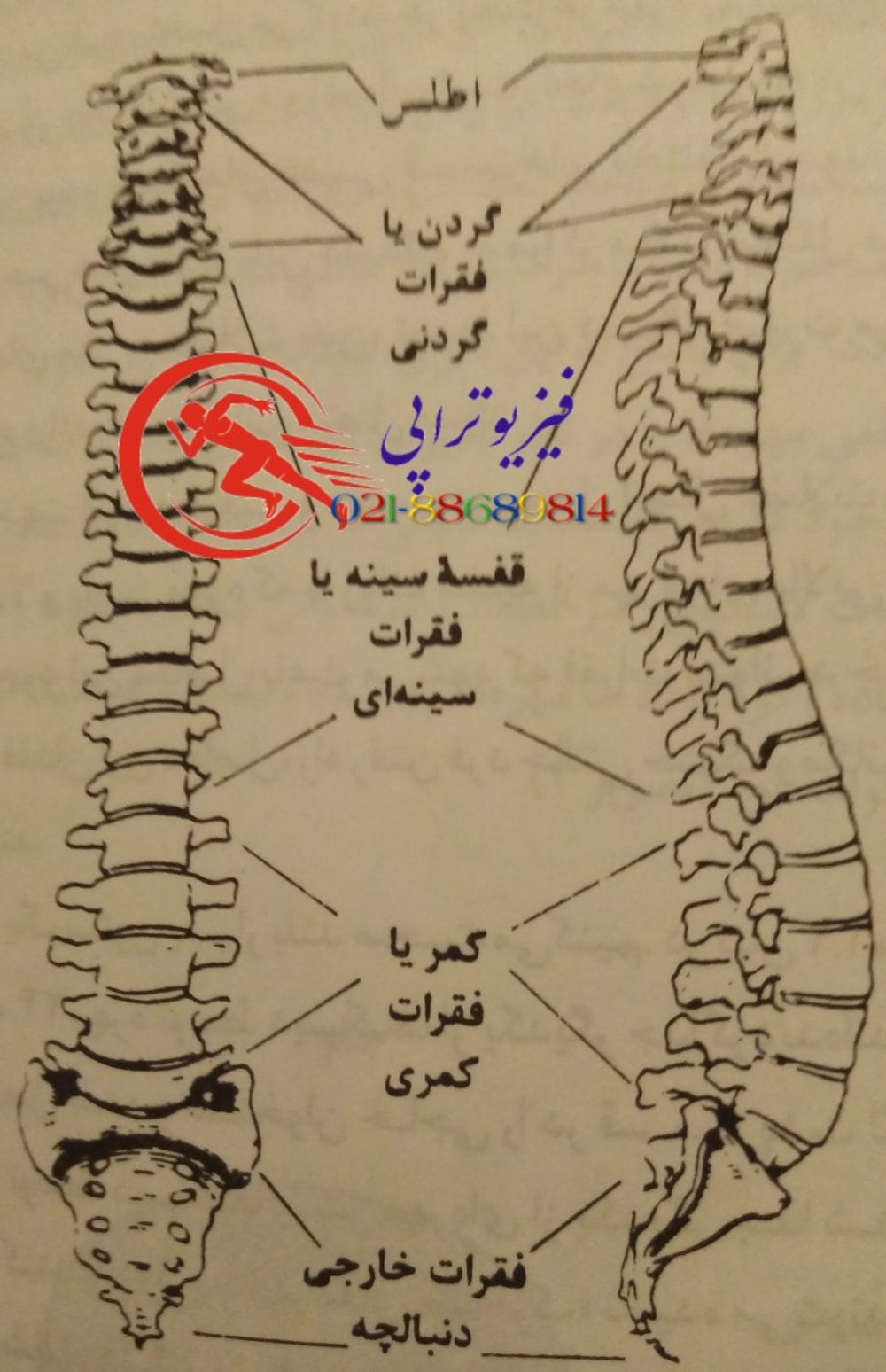 گردن درد ۲